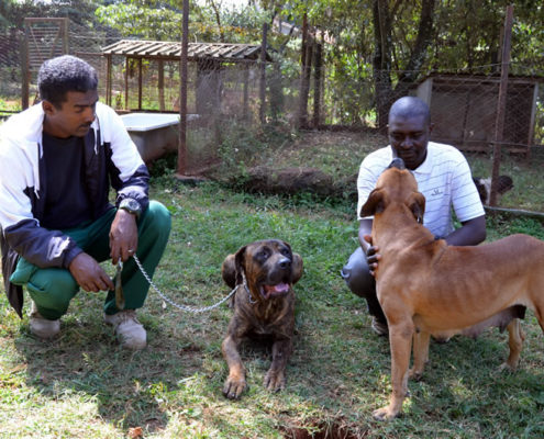 The dogs with trainer Yusuf. Much happier and relaxed